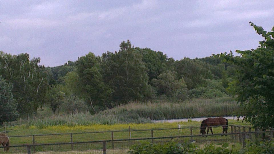 hestefold tisvildeleje udsigt fra terrasse