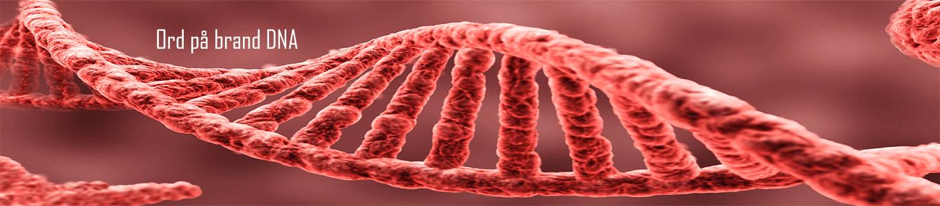 Corporate Identity - ord på brand DNA. Den autentiske virksomhed